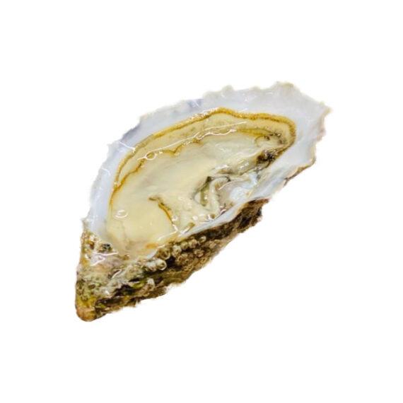 Ostrica Concava Kis Special (Conf. kg1)